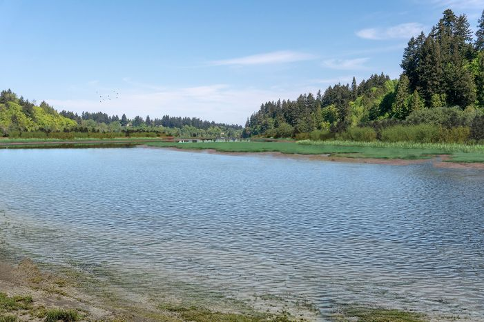 A visual simulation of the Estuary Alternative, looking north from the dock at the south end of the interpretive center. The visual simulation was generated to represent the potential views in the Middle Basin from the dock or boardwalks that would be constructed along the shoreline. The Middle Basin is partially full of water, shallow water is apparent along the shorelines and some tide flats are showing. There is lush salt marsh and vegetated habitat along the shorelines.